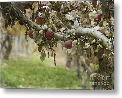 Branch Of An Apple Tree Metal Print
