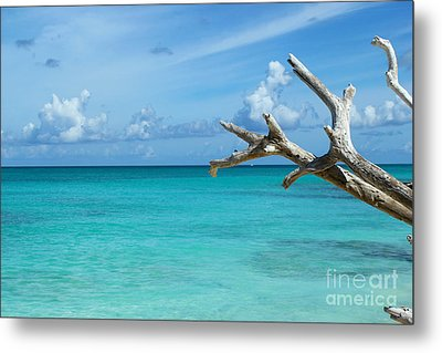 Branch Over The Caribbean Metal Print