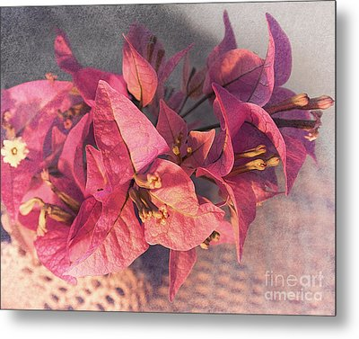 Branch With Bougainvillea Flowers  Metal Print by Sviatlana Kandybovich