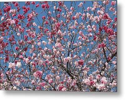 Branches And Blossoms Metal Print by Carol Groenen