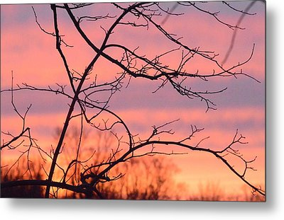Metal Print featuring the photograph Branches Meet The Sky by Dacia Doroff
