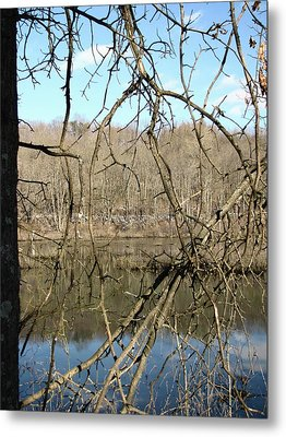 Branches Metal Print by Melissa Stoudt