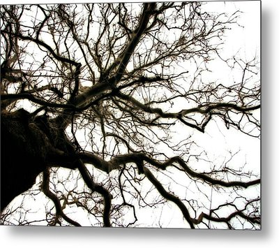 Branches Metal Print by Michelle Calkins