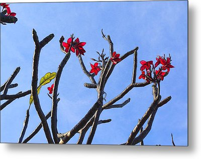 Branches Of Beauty Metal Print by Denise Darby
