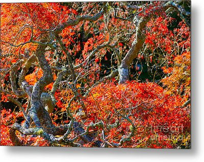 Branches Of Color Metal Print by Cathy Dee Janes