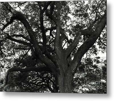 Branches Of Life Metal Print by Andrea Anderegg