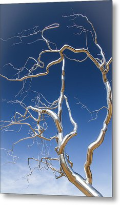 Branches Of Silver Metal Print by Steven Bateson