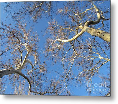 Branching Out Metal Print by Melissa Stinson-Borg