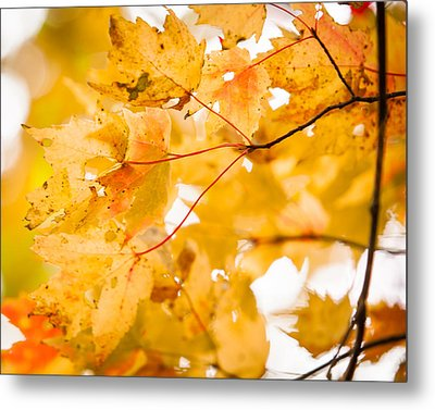 Branching Yellow Metal Print by Melinda Ledsome