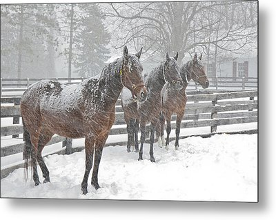 Metal Print featuring the photograph Braving The Storm by Gary Hall