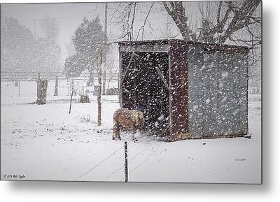 Braving Yet Another Round Metal Print by Matt Taylor