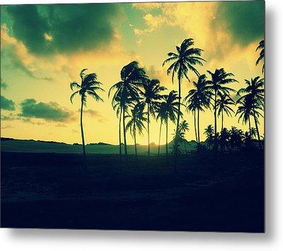 Brazil Palm Trees At Sunset Metal Print by Patricia Awapara