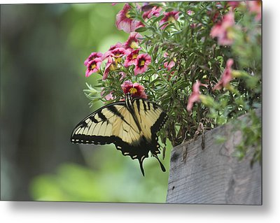 Breakfast At The Windowbox Metal Print by Robert Camp