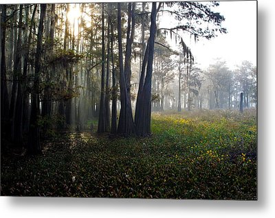 Breaking Through Morning Fog Metal Print