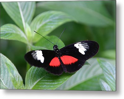 Breathtaking Contrast Metal Print by Denyse Duhaime