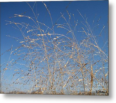 Metal Print featuring the photograph Breeze by Sara  Raber