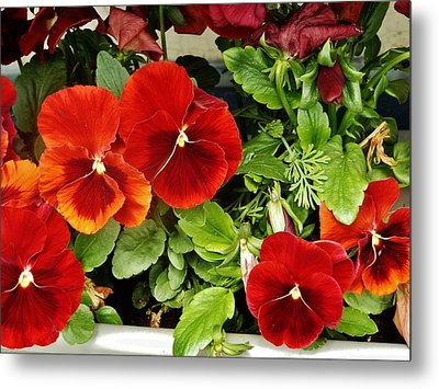 Metal Print featuring the photograph Brick Pansies by VLee Watson