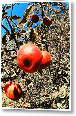 Bright Apples Metal Print by Garren Zanker