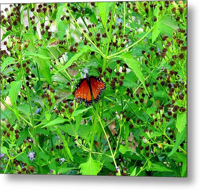 Metal Print featuring the photograph Bright Butterfly by David  Norman