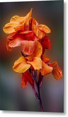 Bright Canna Lily Metal Print by Linda Phelps