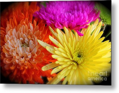 Bright Chrysanthemums Metal Print