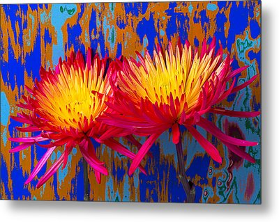 Bright Colorful Mums Metal Print by Garry Gay