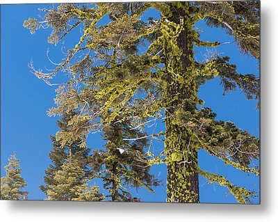 Metal Print featuring the photograph Bright Lichen by Jan Davies