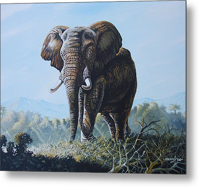 Bright Morning Metal Print by Anthony Mwangi