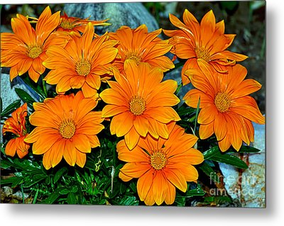 Bright Orange Daisy Garden By Kaye Menner Metal Print