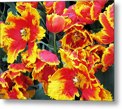 Bright Parrot Tulips Metal Print by Gerry Bates
