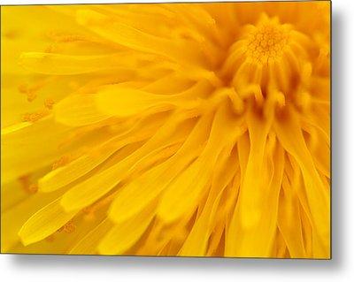 Bright Yellow Dandelion Flower Metal Print by Natalie Kinnear