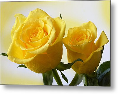Bright Yellow Roses. Metal Print by Terence Davis
