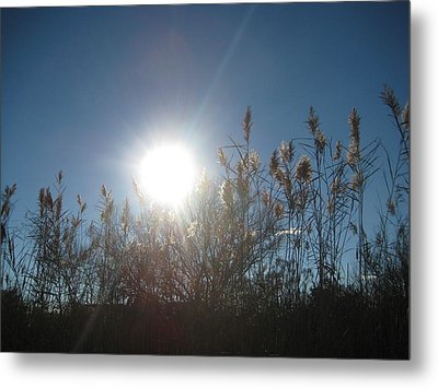 Brilliance In The Grasses Metal Print