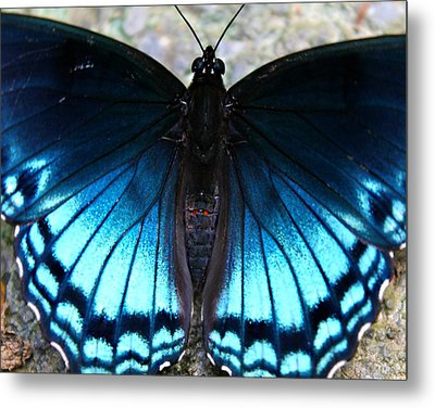 Brilliant Butterfly Metal Print