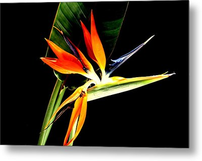 Brilliant Metal Print by Diane Merkle