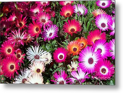 Metal Print featuring the photograph Brilliant Flowers by Chalet Roome-Rigdon