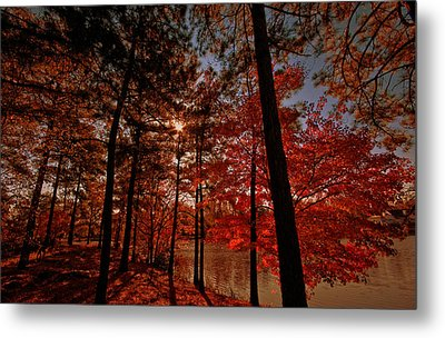 Metal Print featuring the photograph Brilliant Shade by John Harding
