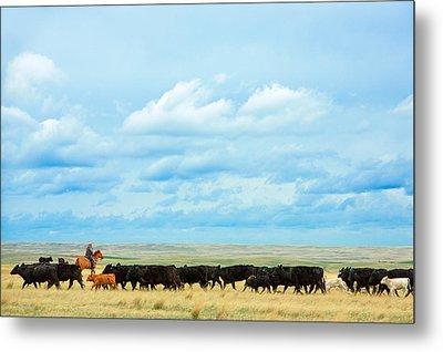 Bringing In The Herd Metal Print by Todd Klassy