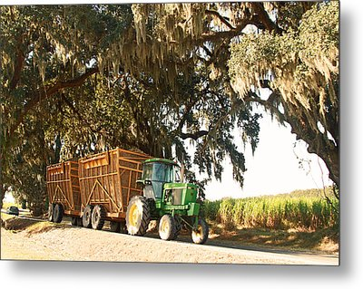 Bringing Sugarcane Ton The Mill Metal Print by Ronald Olivier
