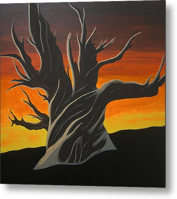 Bristle Cone Pine At Dusk Metal Print by Drew Shourd