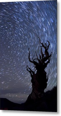 Bristlecone Star Trails Metal Print by Cat Connor