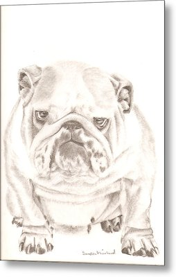 British Bulldog Winnie Metal Print