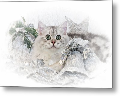 British Longhair Cat Christmas Time II Metal Print by Melanie Viola
