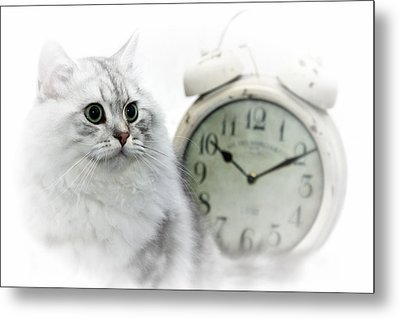 British Longhair Cat Time Goes By II Metal Print by Melanie Viola