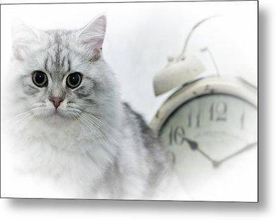British Longhair Cat Time Goes By Metal Print by Melanie Viola