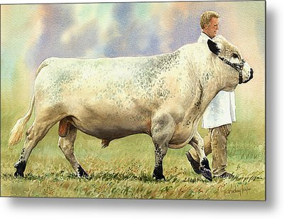 British White Bull Metal Print by Anthony Forster