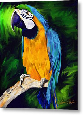 Brody Blue And Yellow Macaw Parrot Metal Print