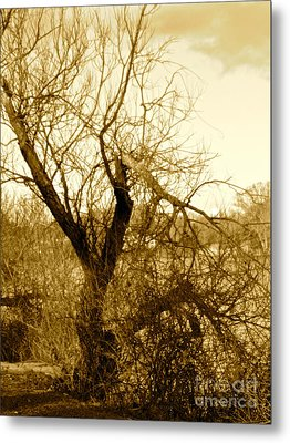 Broken But Beautiful Tree Metal Print by Q's House of Art ArtandFinePhotography