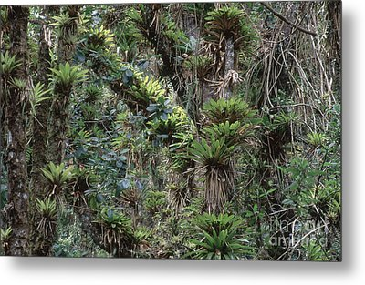 Bromeliads And Other Epiphytes Metal Print
