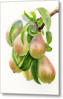 Bronze Pears With White Background Metal Print by Sharon Freeman